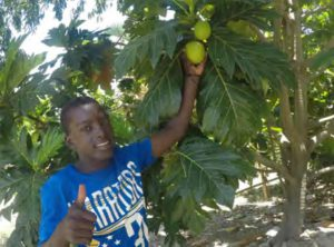 Breadfruit crop St Joseph Clinic Haiti
